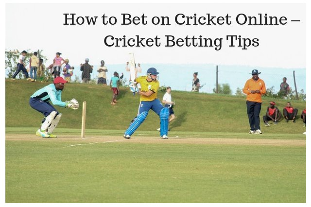 How to Bet on Cricket Online – Cricket Betting Tips